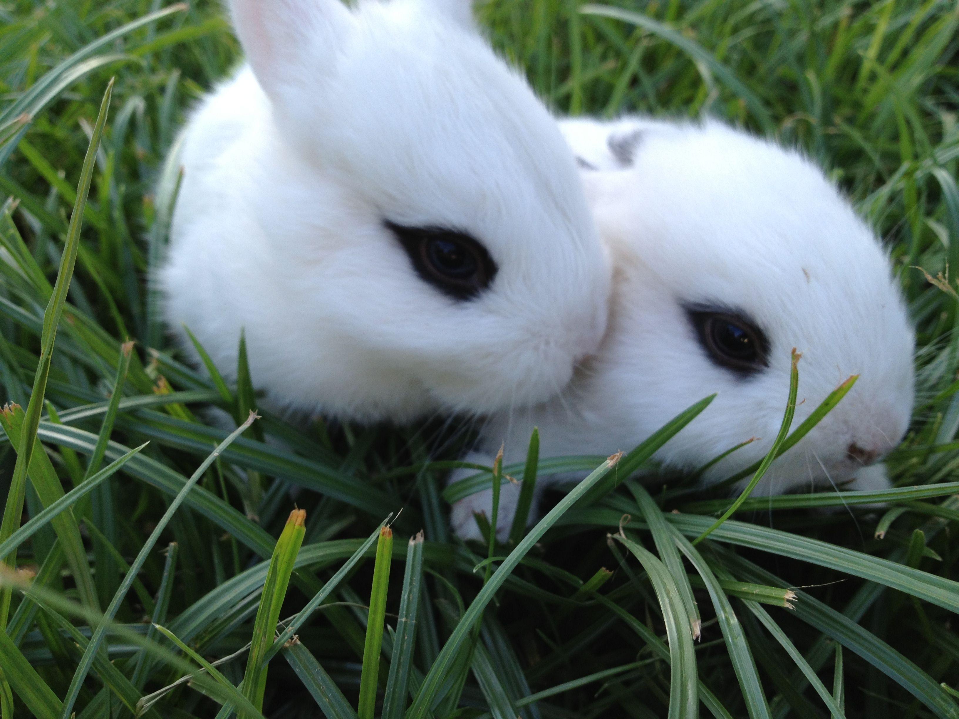 Wild baby bunnies from my yard | Baby bunnies, Animals ...