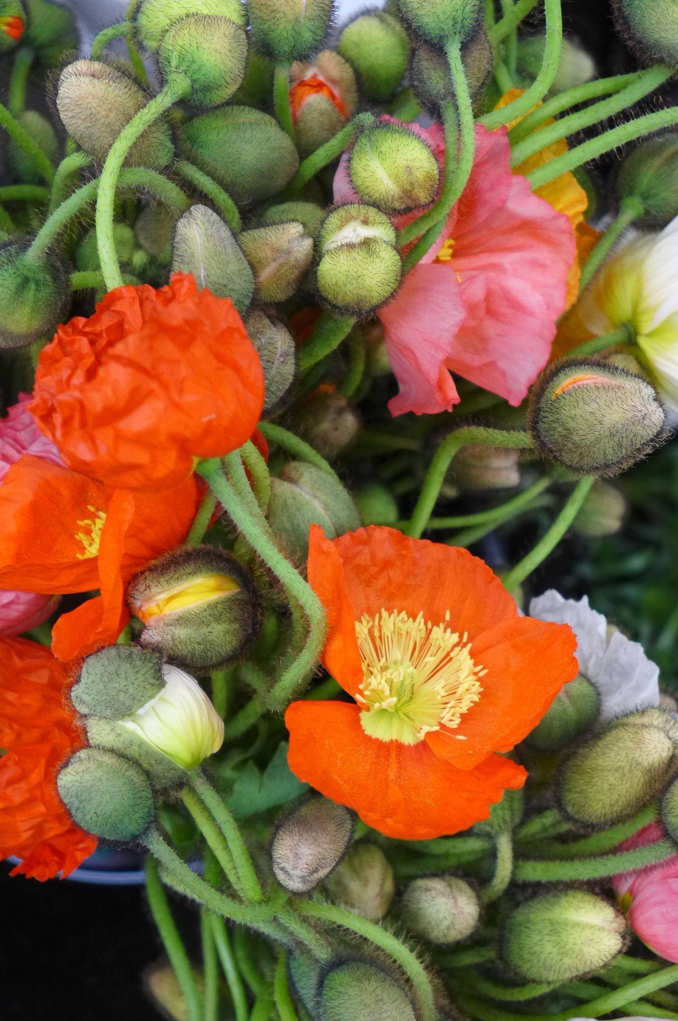 LA Flower Market - Chris Dangtran