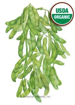 Edamame Butterbean Organic Seeds 2 99 Avec Images Glycine