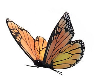 Hansa makes learning fun! Introduce your little ones to the animal kingdom with this life-like plush monarch butterfly that features realistic detail and interesting animal facts. From Hansa.
