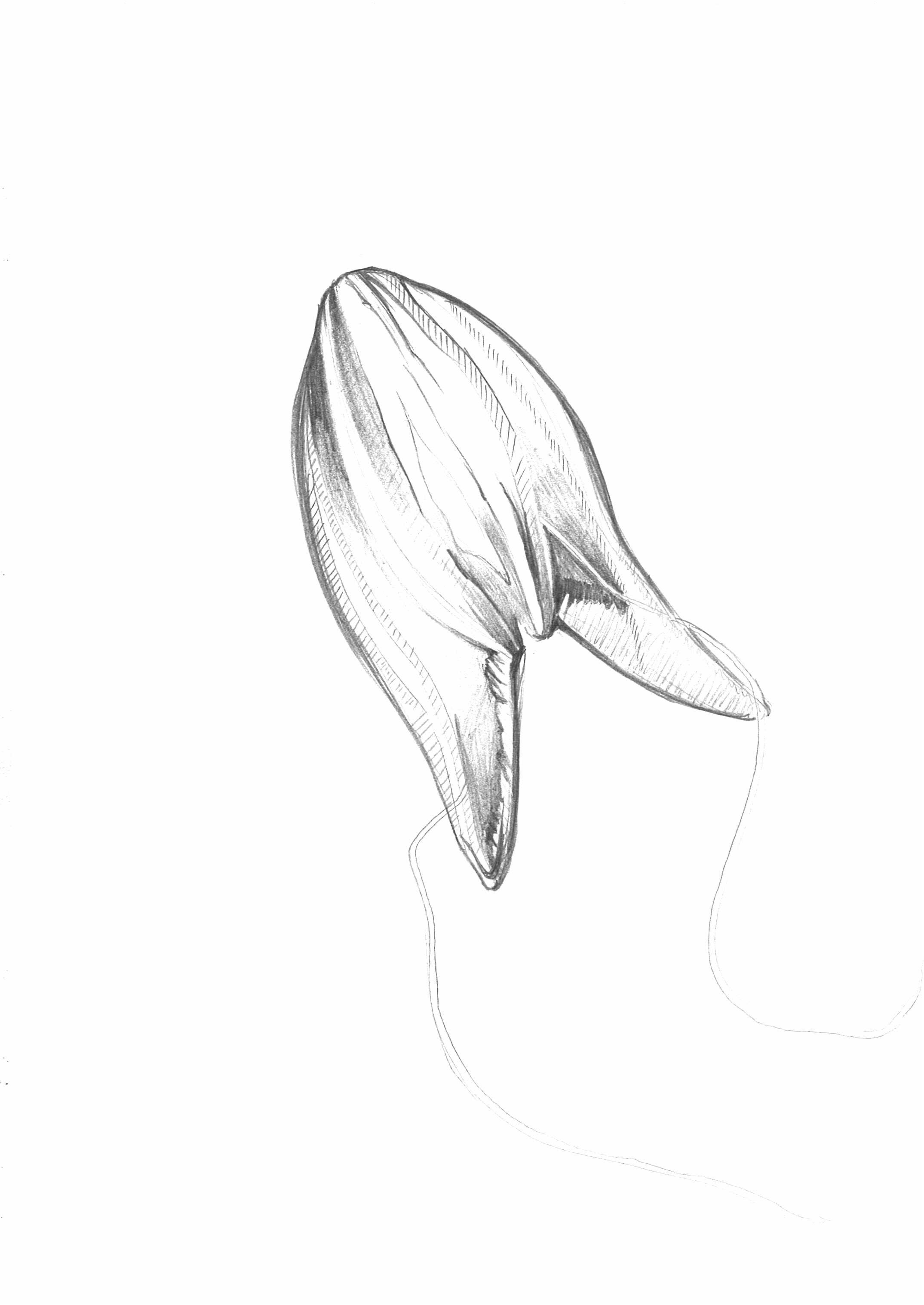 Sketch_Jellyfish_5