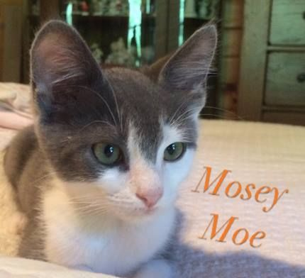 Mosey on Moe moseying around for his forever home! Rescued