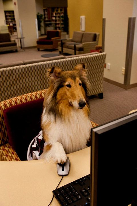 The Meeting Of Two Mascots Texas A M Rough Collie Texas