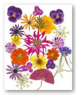 Manualitats amb flors...sistema per secar flors per decorar centres de taula, álbums, quadres...