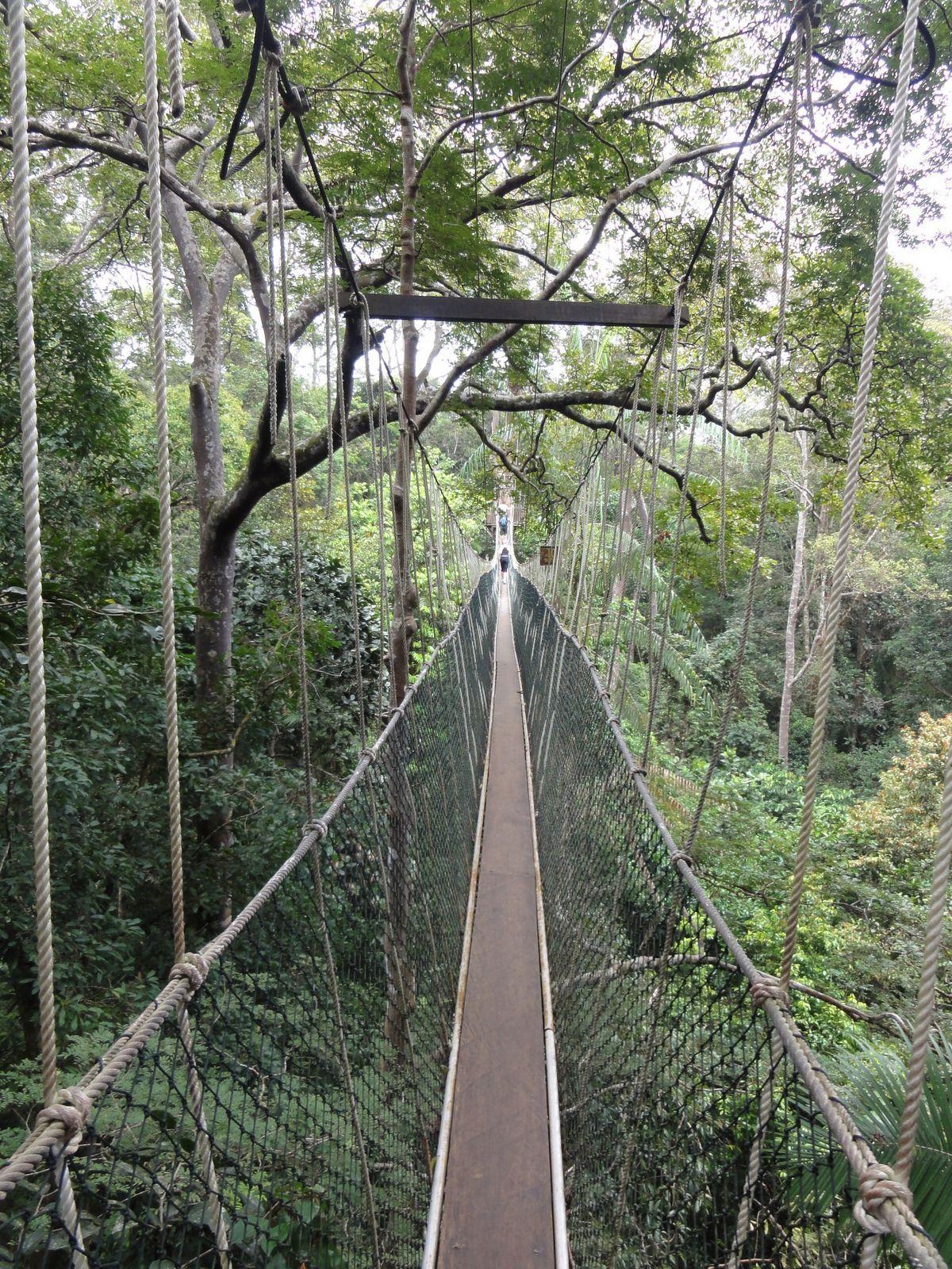 Taman Negara Canopy Walkway Malaysia & Taman Negara Canopy Walkway Malaysia | Wonderful places ...