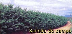Sansão-do-campo