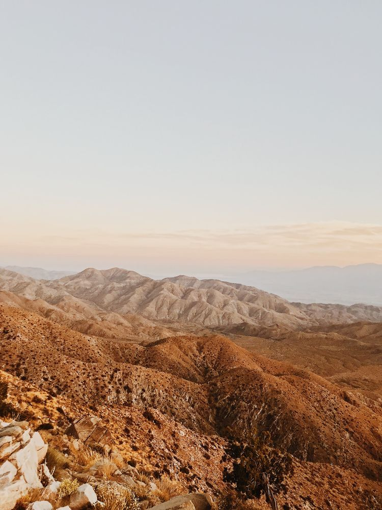 Pin by 𝔸𝕓𝕓𝕪 on wandering to & fro in 2020 Joshua tree