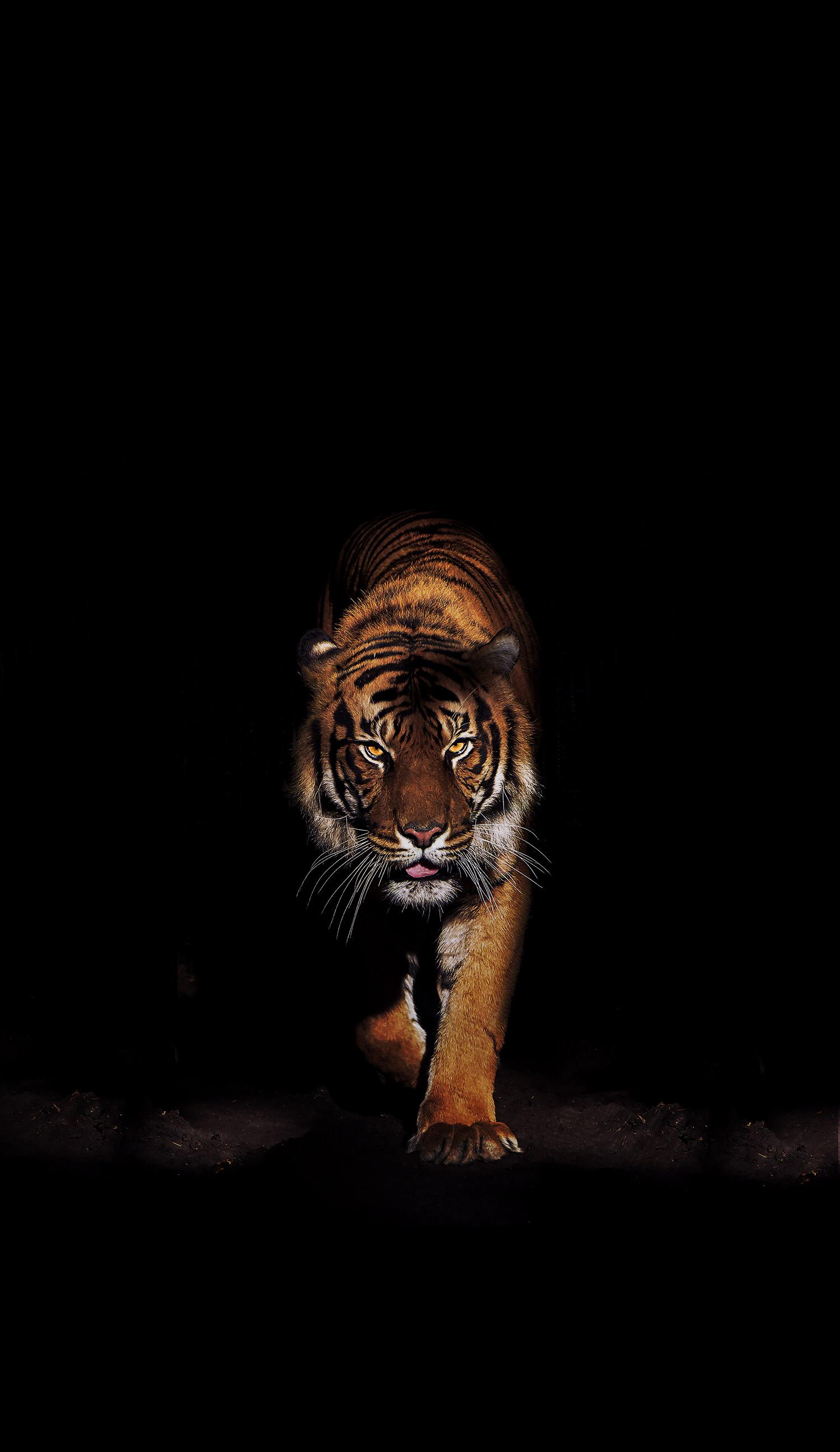 Pin By Behnam On Animal Tiger Wallpaper Cat Wallpaper