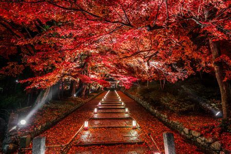 Dye it red Photo by Takahiro Bessho — National Geographic Your Shot