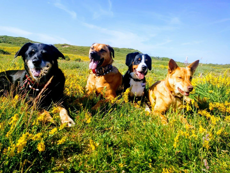 Urlaub Mit Hund Auf Texel Danke An Andrea Fur Das Bild Holland Hundefreundlich Hundestrand Niederlande Hundeurlaub Te Hundestrand Urlaub Mit Hund Hunde