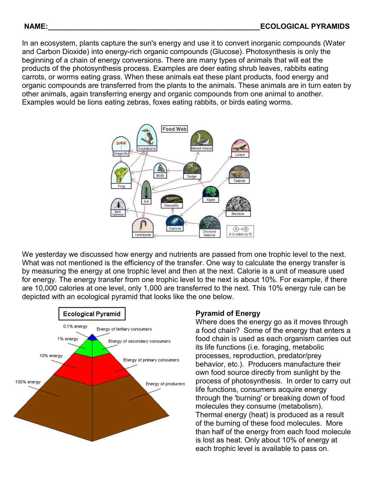 Ecological Pyramids Worksheet