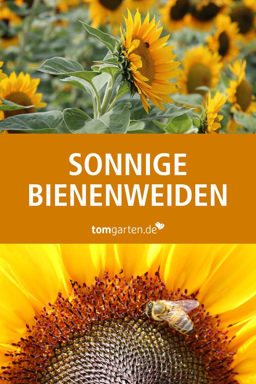 Sie Ist Eine Der Bekanntesten Blumen Im Garten Die Sonnenblume Dabei Bietet Sie Aber Nicht Nur Was Fur S Auge Sondern Blumensamen Bienenfreundlicher Garten Und Sonnenblumensamen