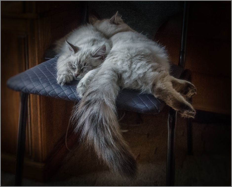 Optina ~ Sweet Dreams beautiful friends ♥