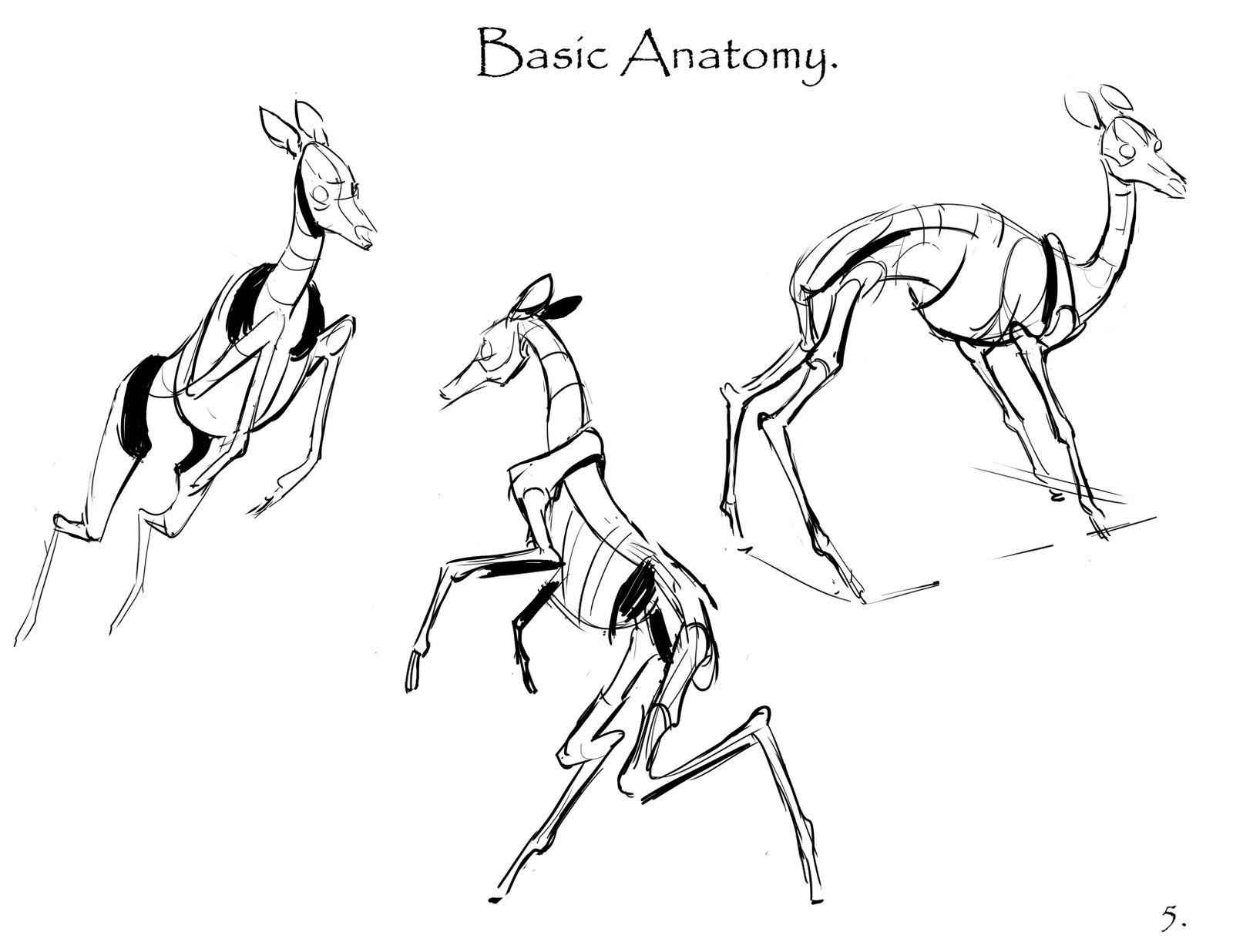 tutorial+deer+part+5.jpg (1600×1236) | Animal anatomy | Pinterest ...