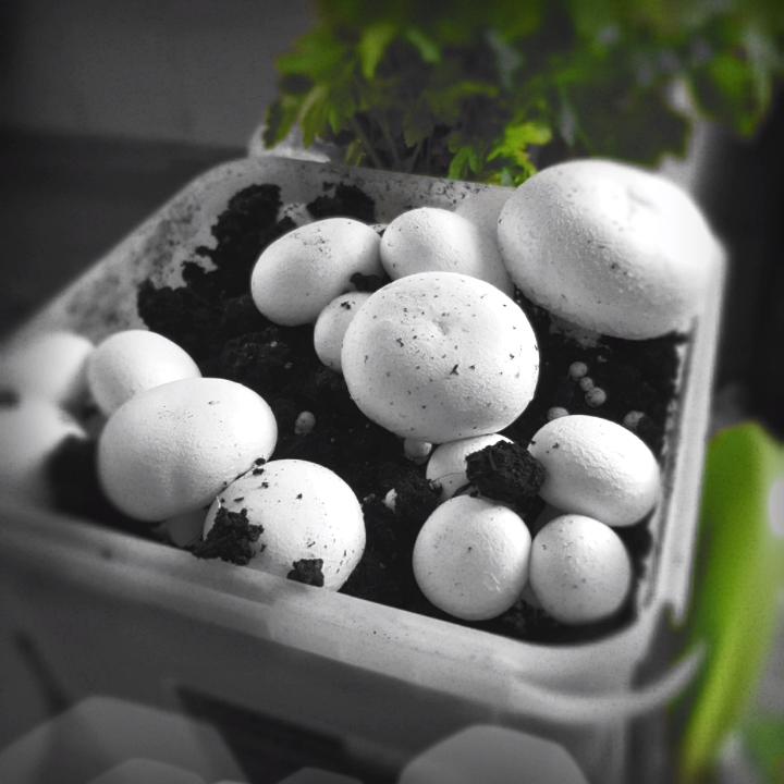 Photo of Mushroom Growing For Beginners