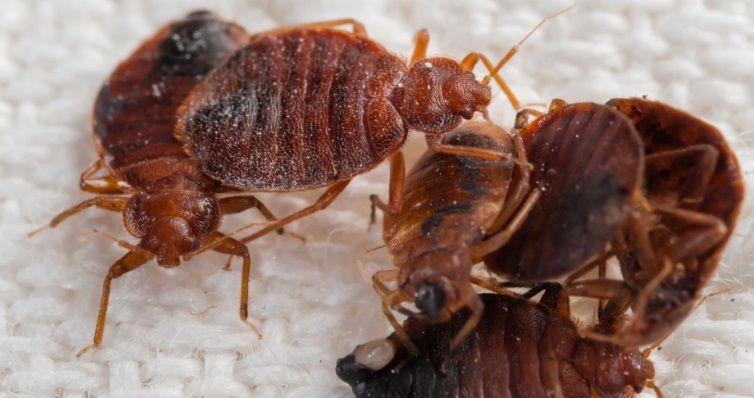 Kill Bed Bugs Nj Http Killbedbugsnj Com Services Detail Bed Bugs
