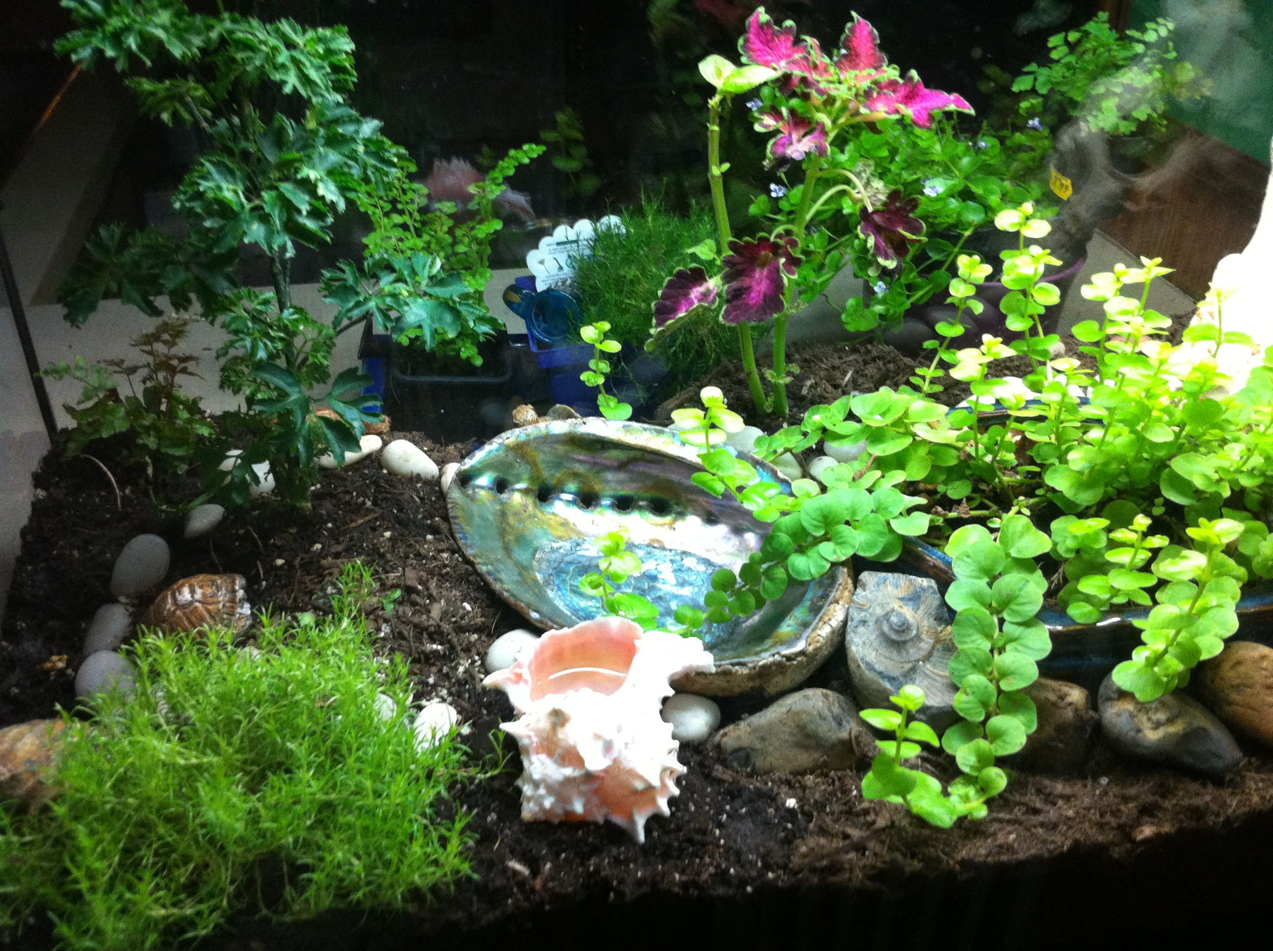 Fish tank terrarium - Aquarium Turns Into Terrarium