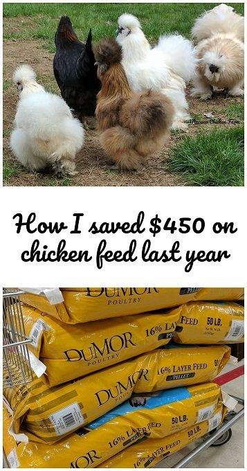 How I saved $450 on chicken feed last year (you can too!)