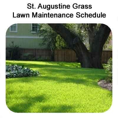St Augustine Grass Care Florida Fertilizer Lawn Maintenance Schedule St Augustine Grass Care Lawn Maintenance St Augustine Grass