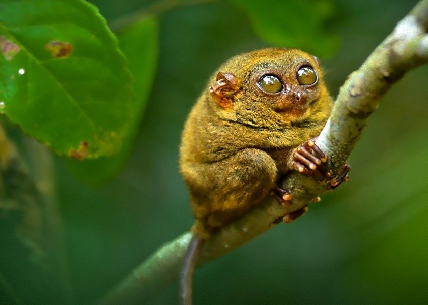 10 Intriguing Animals That Start With The Letter T Funny Looking Animals Interesting Animals Tarsier