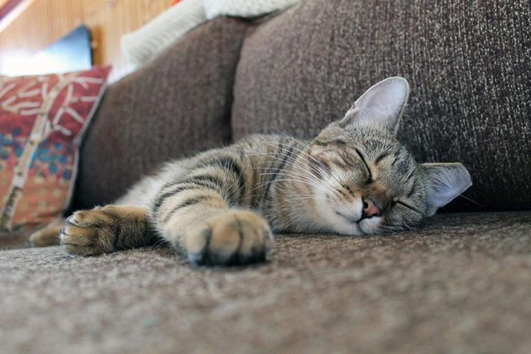 This Is The Purrfect Place For A Cat Nap After A Delicious And Nutritious Meal Try Our Complete Formulas For Your Kitty Today C Cats And Kittens Cats Cat Nap