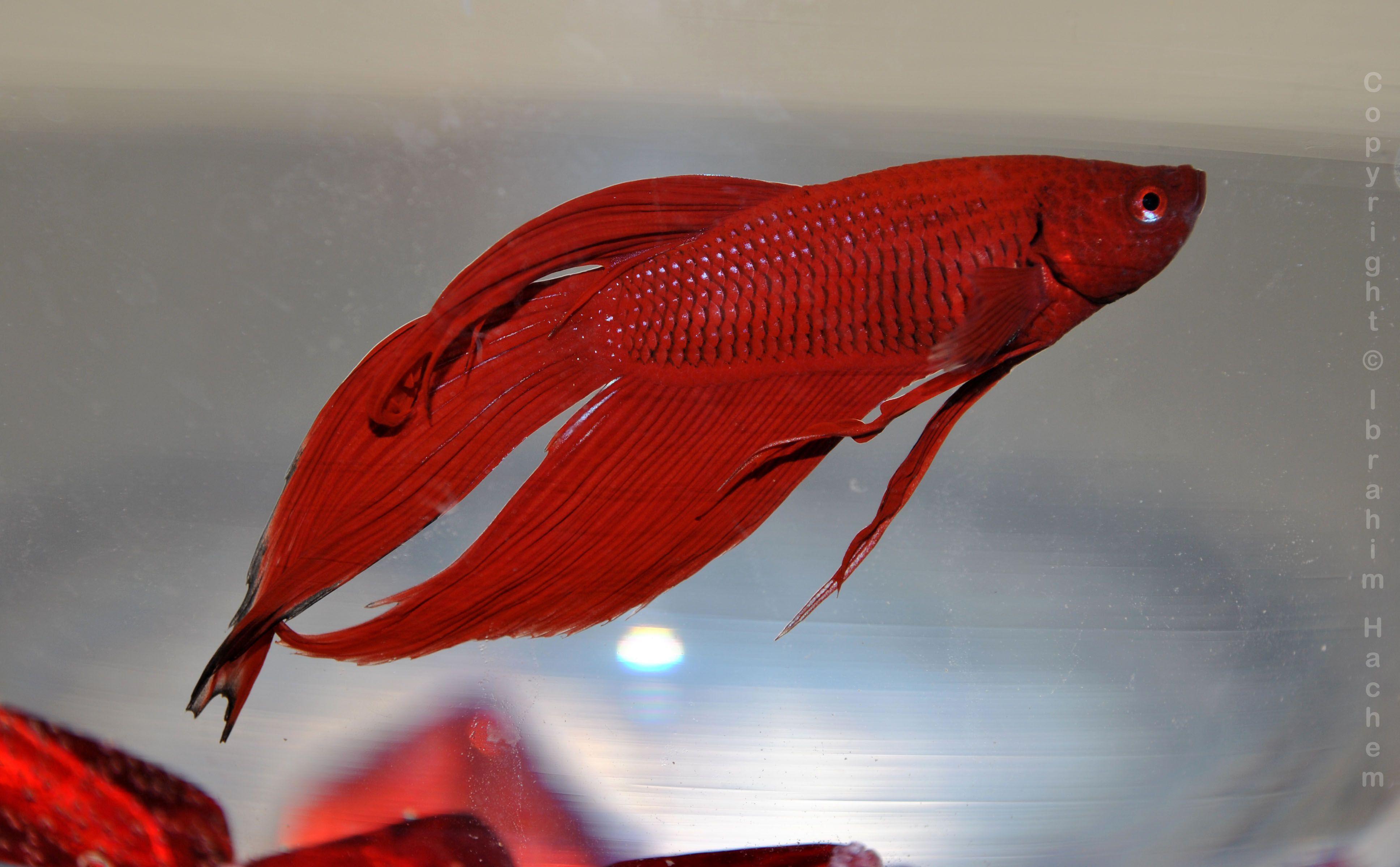 Fish tank antibiotics - Patricia The Beta See More Betta Fish Tank