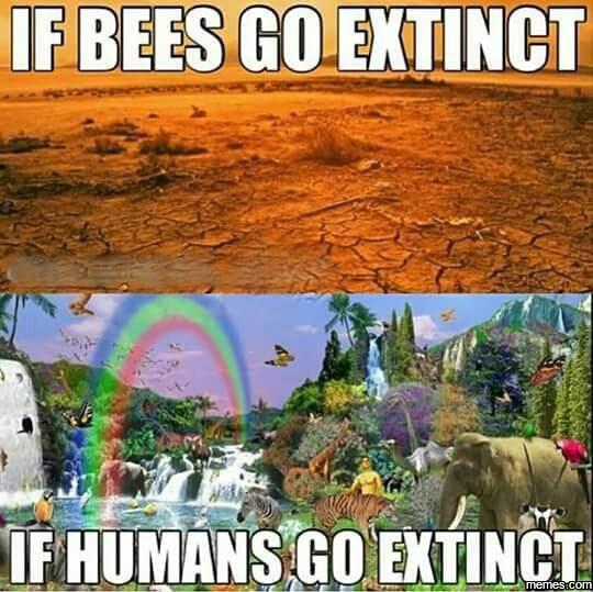 If Bees Go Extinct Vs Humans Http Funphotololz Com Random If