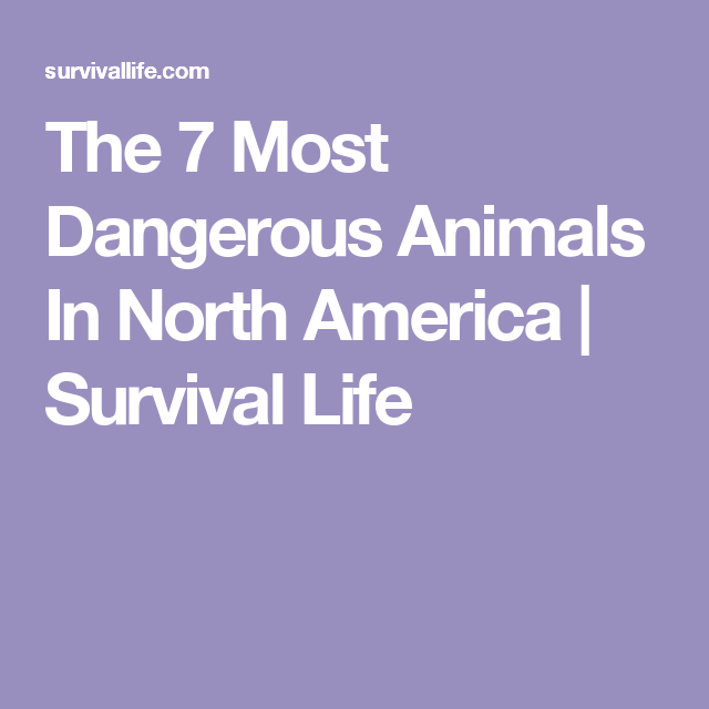 The 7 Most Dangerous Animals In North America | Survival Life
