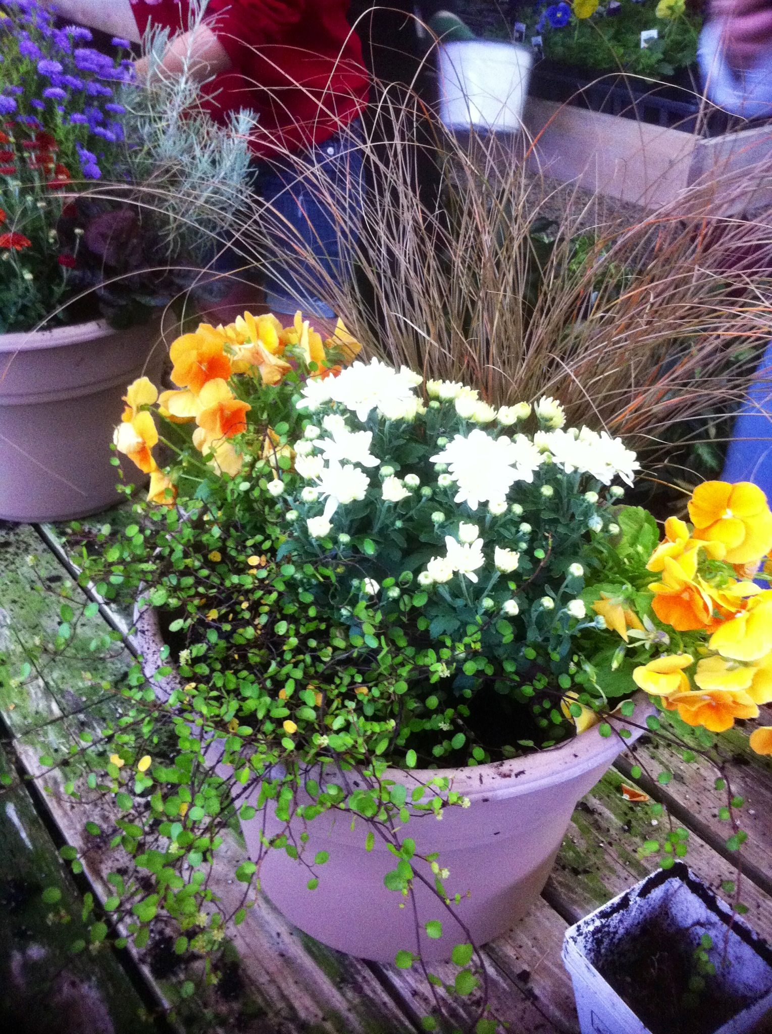 For Container Gardening, Follow The Spillers, Fillers And Thrillers Model