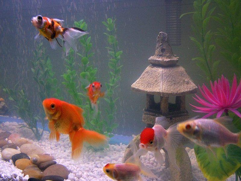 Aquarium Deko Selber Machen Inspirierende Ideen Und Tipps Fur