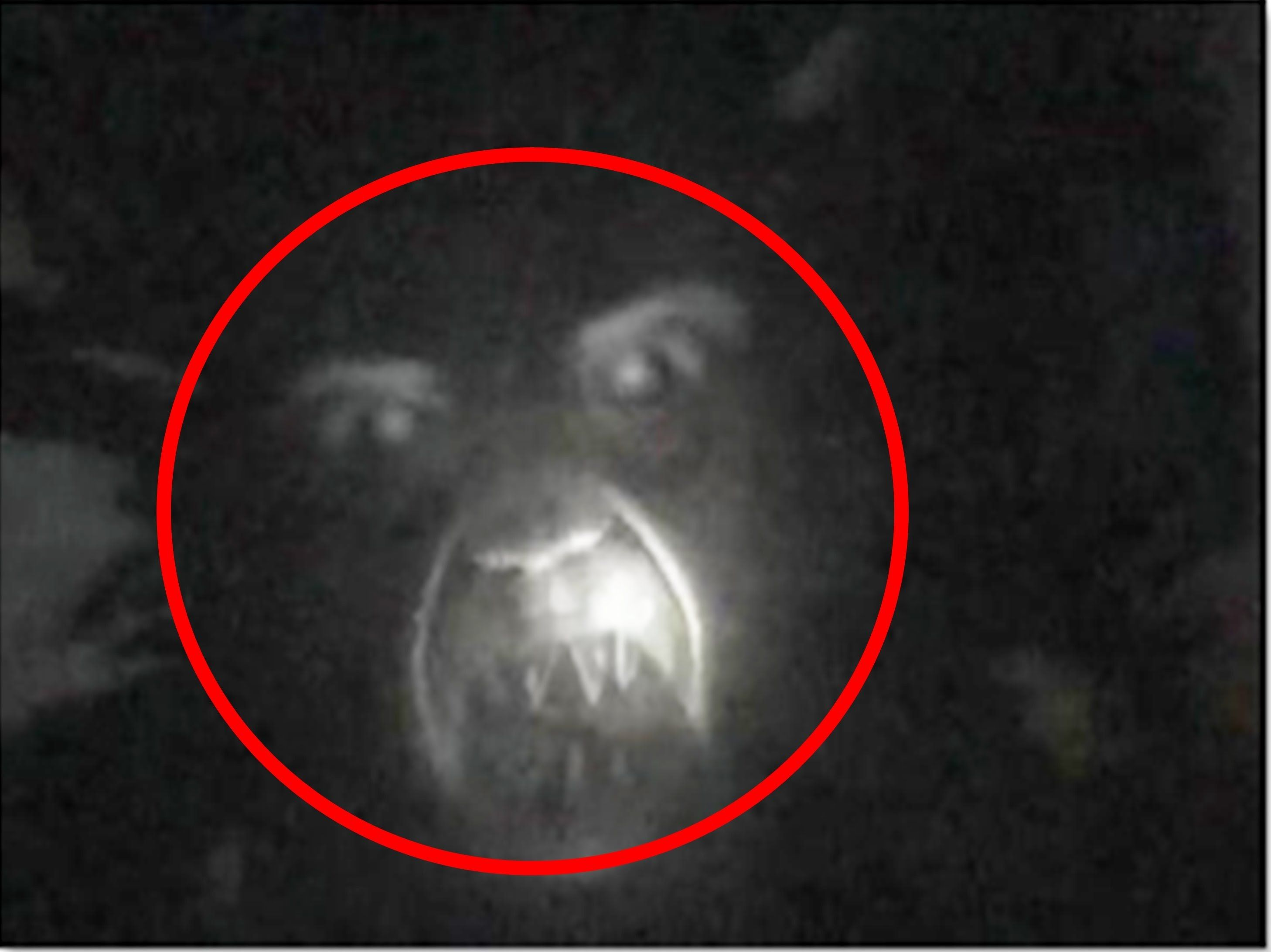 Capturing A Real Ghost On Is The Holy Grail Of Paranormal Investigations