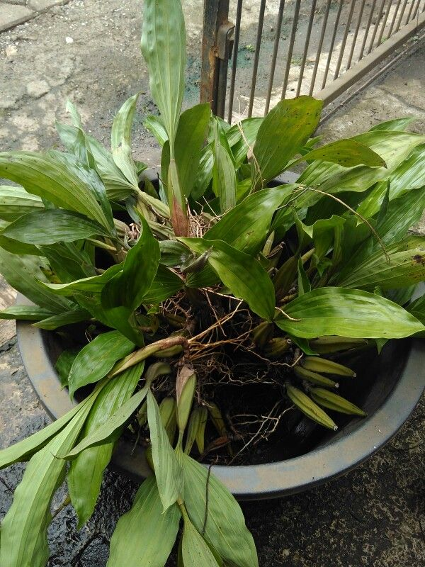 Pin Di Frontyard Plants