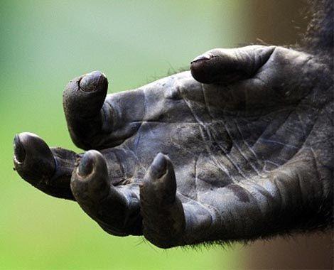 Gorilla Hand.