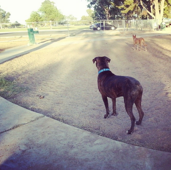 Dog Park Fun At Jacobs Dog Park Tucson Az Angus Off Leash Dogs Puppies Cutedogs Dogparks Tucson Arizona Angusoffleash Dog Park Grand Dog Dogs