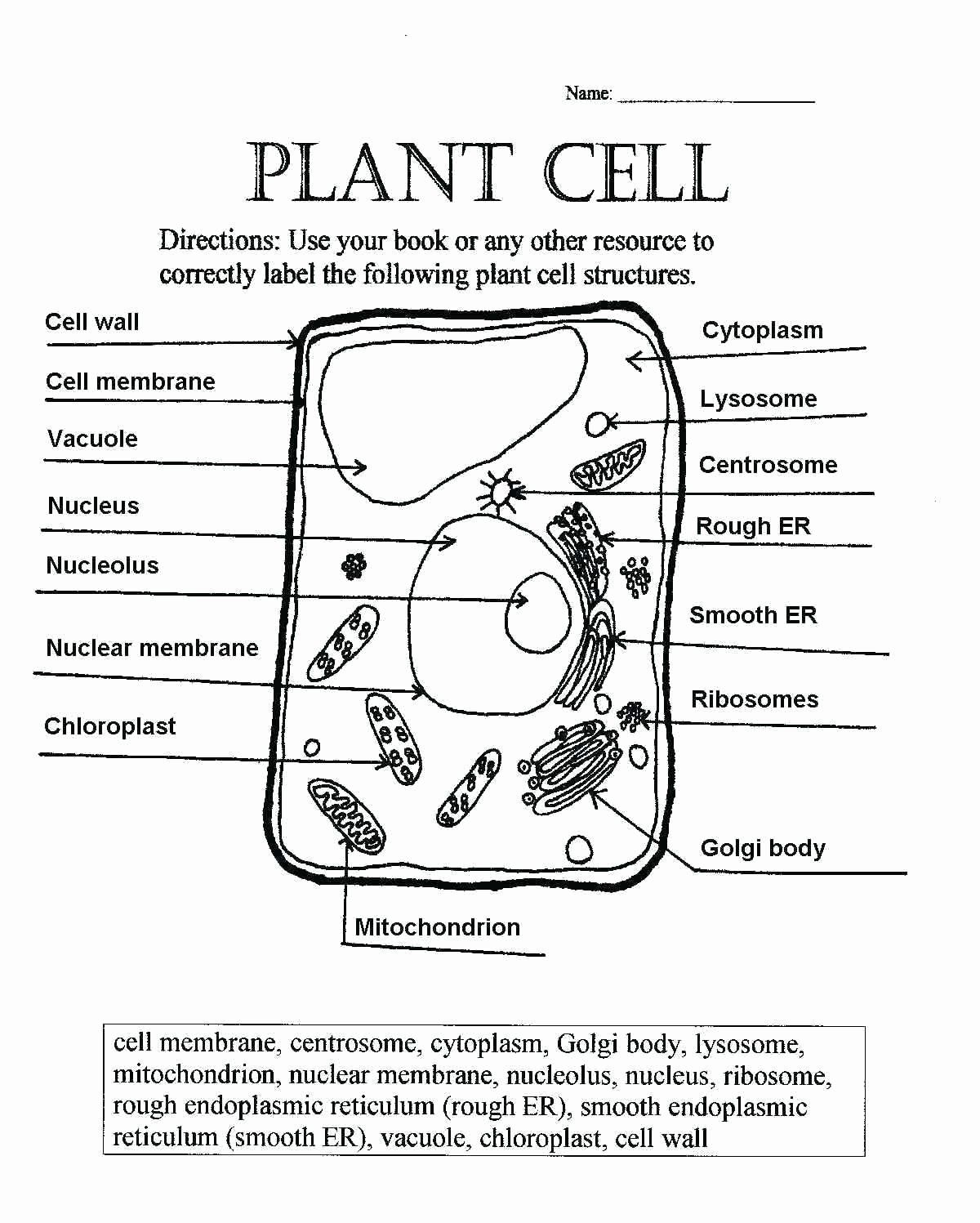 Passive Transport Coloring Answers Elegant Plant And Animal Cell Coloring Worksheets Key Brotherprin Cells Worksheet Plant Cells Worksheet Plant Cell Diagram