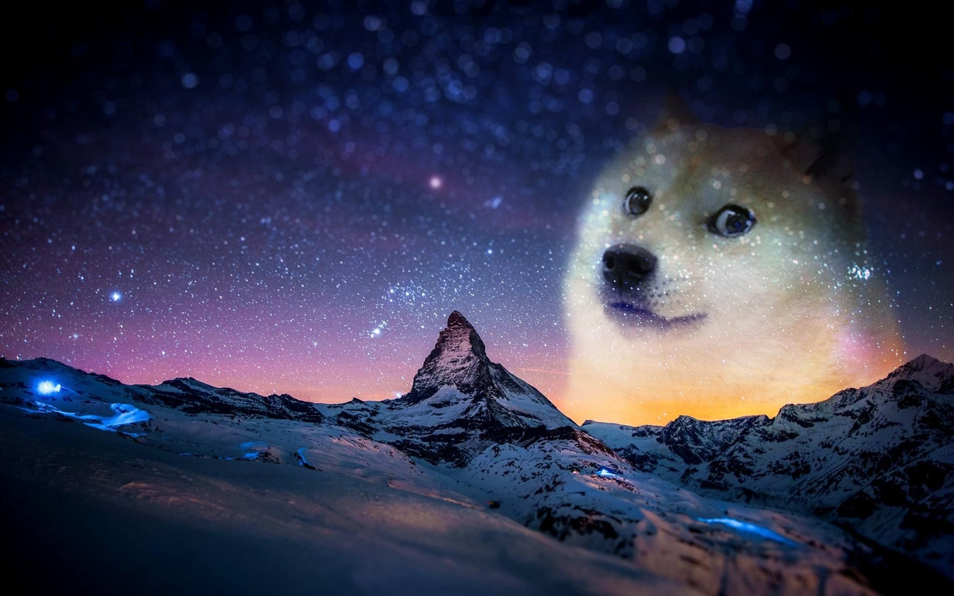 Customer Came In With This Wallpaper Post Animals White Dogs Doge Meme