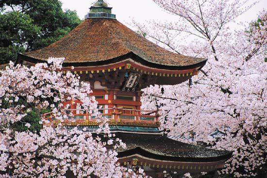 Kyōto Japan Cherry Blossom Japan Cherry Blossom Cherry Blossom Festival