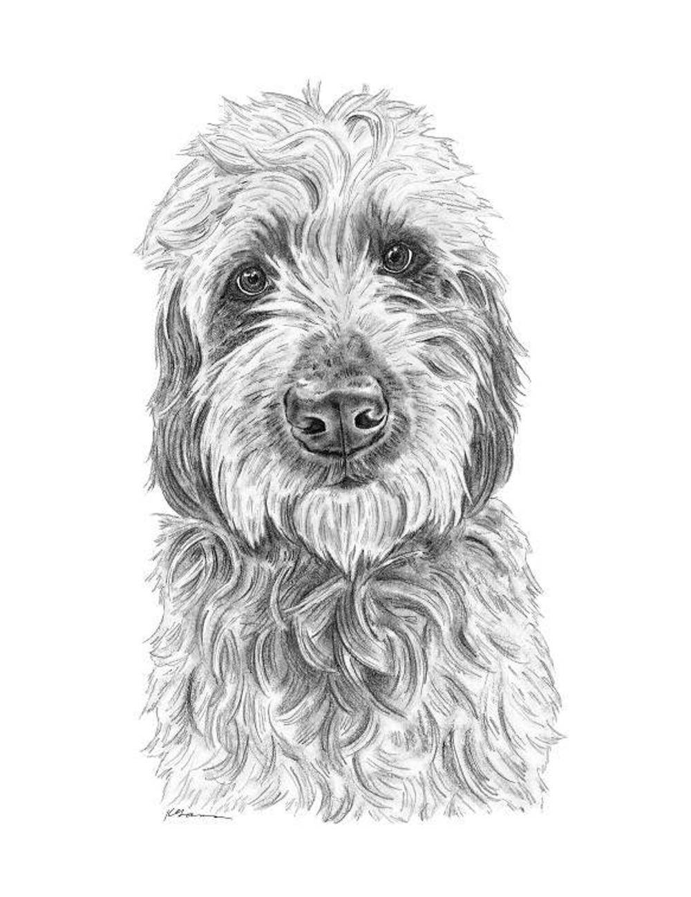 Goldendoodle Art Dog Art Golden Doodle Art Labradoodle