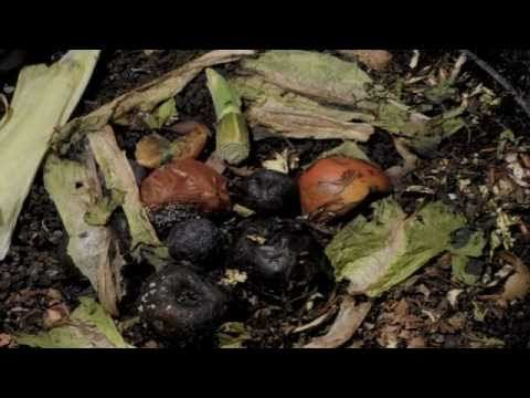 Wormery over an 8 week period time lapse- Use with soil lesson