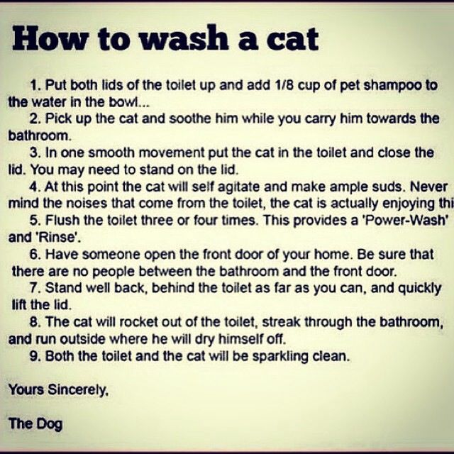 How To Wash A Cat Laughing So Hard Humor Just For Laughs
