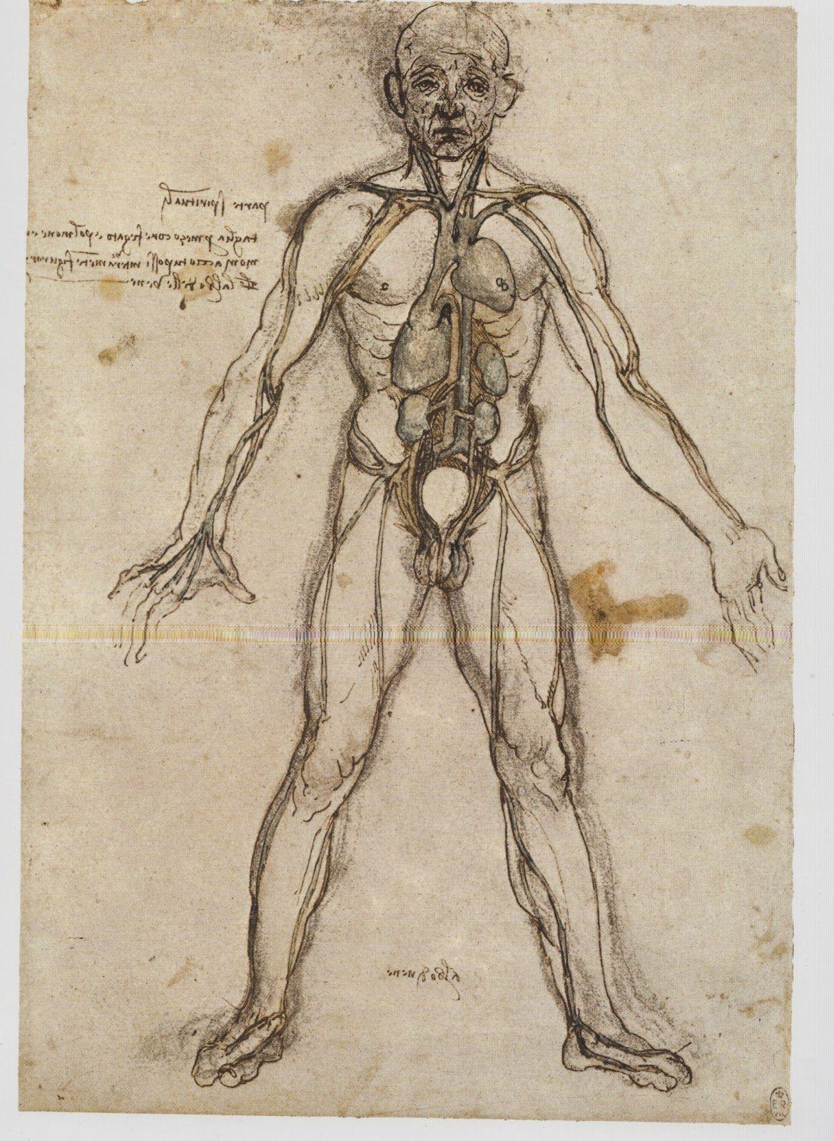 Tolle Da Vinci Anatomie Skizzen Ideen - Menschliche Anatomie Bilder ...