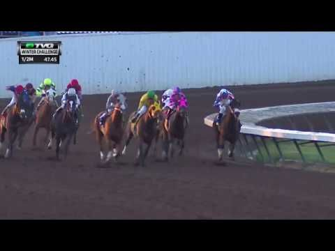 California Chrome sets track record in Winter Challenge - A New York State of Racing - Horse Racing Nation
