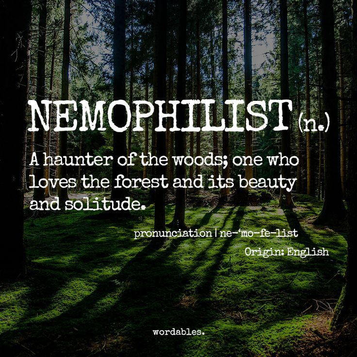 Forest Quotes Delectable Bilderesultat For Forest Quotes Woodland Walks Pinterest