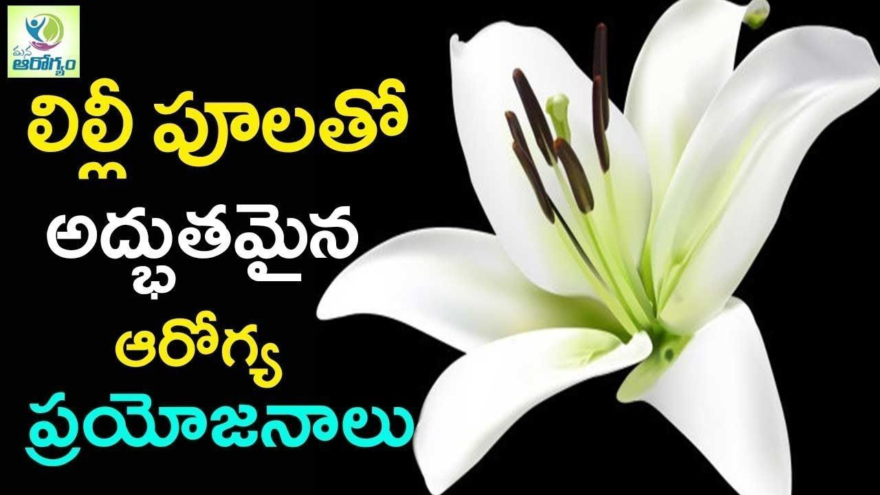 Perfect Lily Flower Meaning In Telugu And Pics Flower Lily Meaning Perfect P Flower Lily Meaning Perfect Pi In 2020 Flower Meanings Lily Flower Lily Meaning