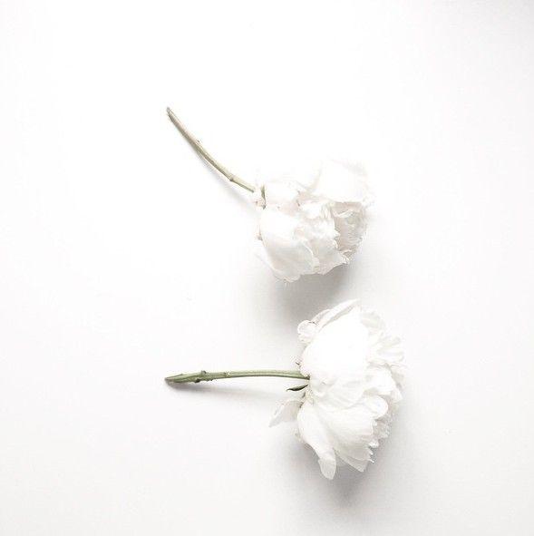 Pin by g e o m e t r i c on flowers pinterest youtube white flowers are friends mightylinksfo