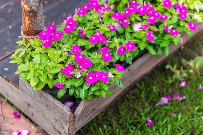 цветы которые можно долго не поливать