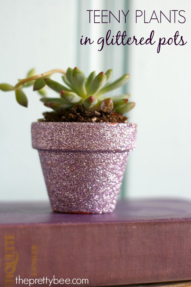 Easy Mother S Day Gift Teeny Plants In Glittered Pots Succulents Diy Diy Flower Pots Succulent Gifts