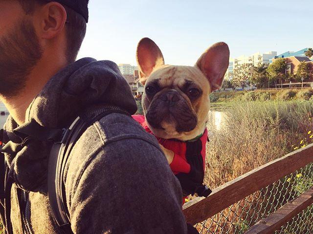 6ab297c3eb05a1 Air | K9 Sport Sack Dog Backpack - Pet Carrier | Dog carrier, Dog ...