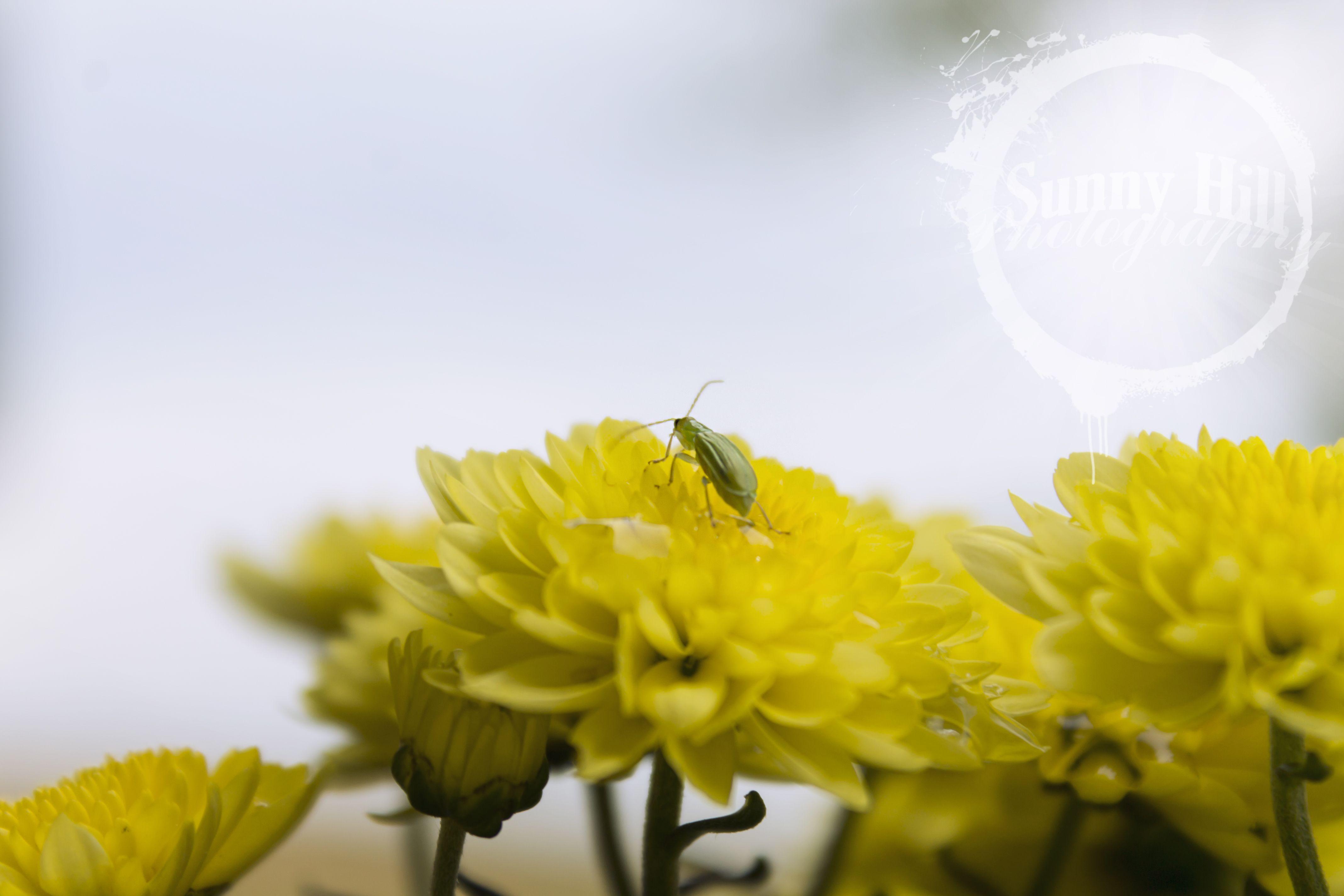 Little Green Beetle www.krista-woller.artistwebsites.com www.facebook.com/sunnyhillphotography