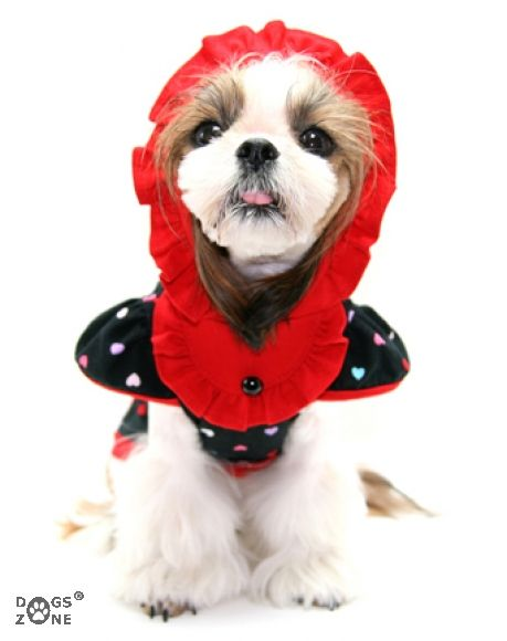 Pelo Kurtka Ocieplana Moro 3 Kolory Na Miare 3618621368 Oficjalne Archiwum Allegro Animals Dogs Shows